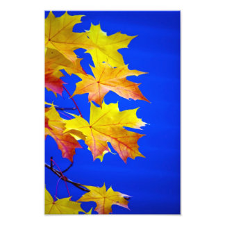 Fall Against Blue Photographic Print