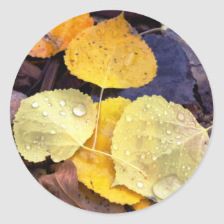 Fall Aspen Leaves Stickers
