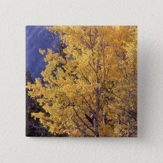 Fall aspen tree pinback button