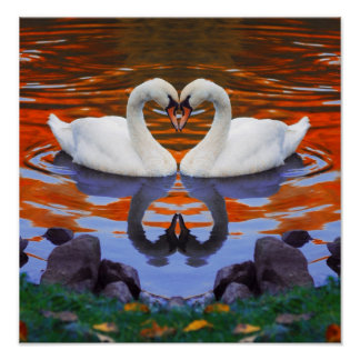 Fall Autumn Lake Reflections of Swans in Love Poster