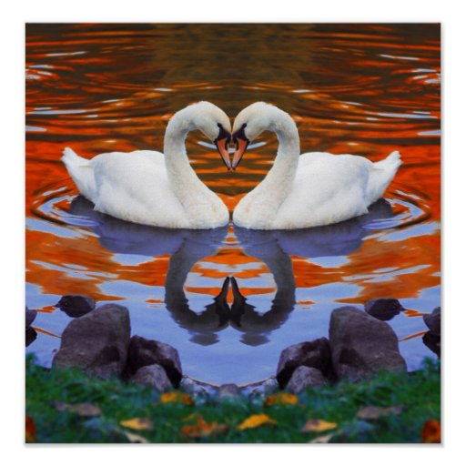 Fall Autumn Lake Reflections of Swans in Love Print