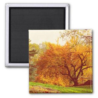 Fall Autumn Landscape Photo of Central Park Refrigerator Magnet