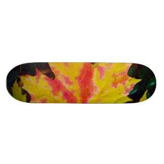 Fall Autumn Maple Leaf Skate Board Decks