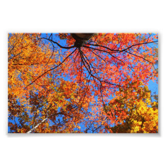 Fall Canopy Photo Print
