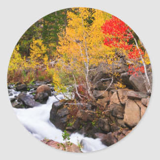 Fall color along Bishop Creek, CA Round Sticker