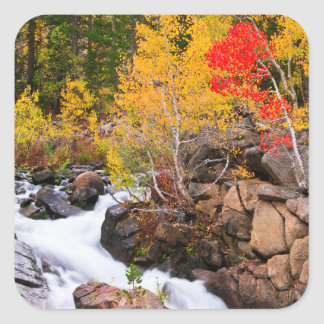 Fall color along Bishop Creek, CA Square Sticker
