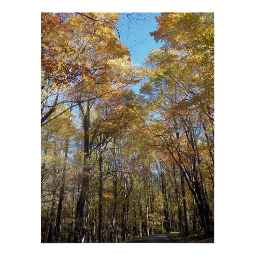 Fall Color Along the Roadway Poster