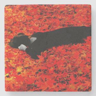 Fall Color! Coaster