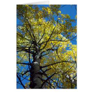 Fall Color III Stationery Note Card