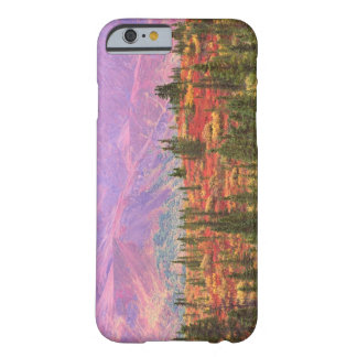 Fall color in Denali National Park Barely There iPhone 6 Case
