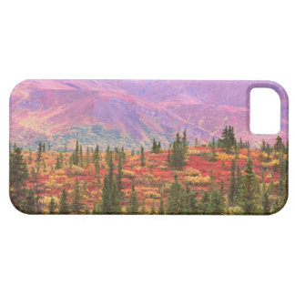 Fall color in Denali National Park Case For The iPhone 5