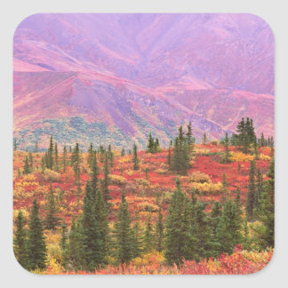 Fall color in Denali National Park Square Sticker