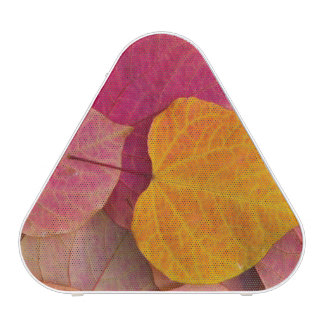 Fall color on Forest Pansy Redbud fallen