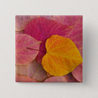 Fall color on Forest Pansy Redbud fallen 15 Cm Square Badge