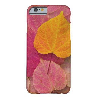 Fall color on Forest Pansy Redbud fallen Barely There iPhone 6 Case