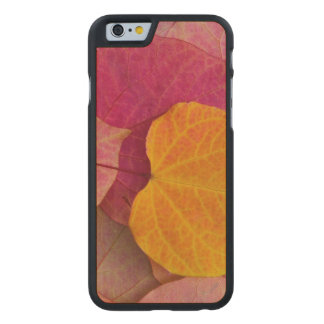 Fall color on Forest Pansy Redbud fallen Carved® Maple iPhone 6 Slim Case