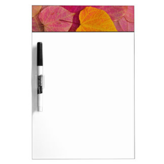 Fall color on Forest Pansy Redbud fallen Dry Erase Board