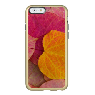 Fall color on Forest Pansy Redbud fallen Incipio Feather® Shine iPhone 6 Case