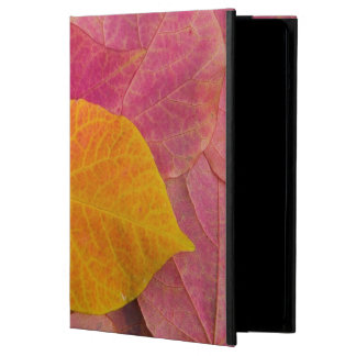 Fall color on Forest Pansy Redbud fallen iPad Air Cover
