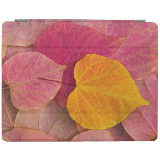 Fall color on Forest Pansy Redbud fallen iPad Cover