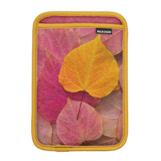 Fall color on Forest Pansy Redbud fallen iPad Mini Sleeve