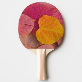 Fall color on Forest Pansy Redbud fallen Ping Pong Paddle