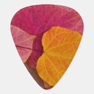 Fall color on Forest Pansy Redbud fallen Plectrum