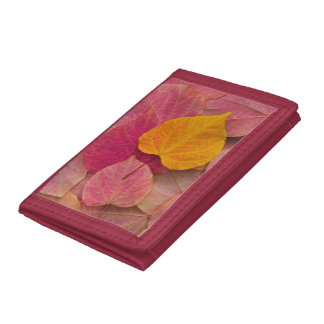Fall color on Forest Pansy Redbud fallen Tri-fold Wallet