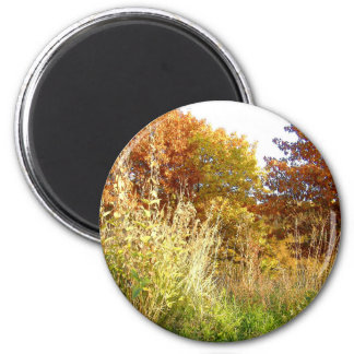 Fall Colors At Charter Oak Park 6 Cm Round Magnet