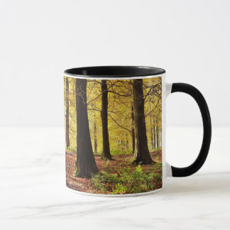 Fall Colors Autumn Mug