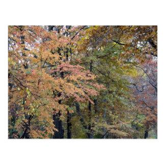 Fall Colors Central Park New York City Postcard