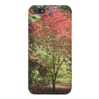Fall Colors Cover For iPhone 5/5S