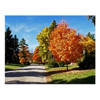 Fall Colors in Cincinnati Postcard