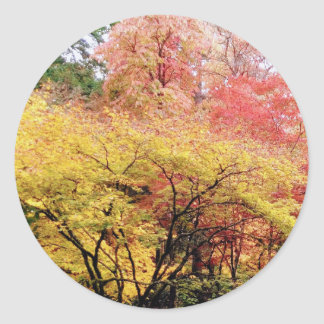 Fall Colors in Seattle Classic Round Sticker