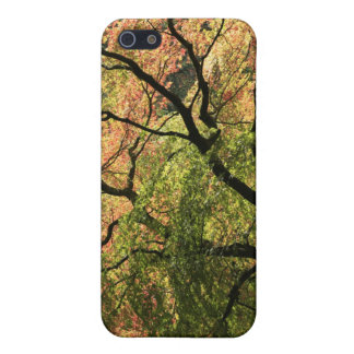 Fall Colors iPhone 5/5S Cases