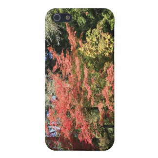 Fall Colors iPhone 5/5S Covers