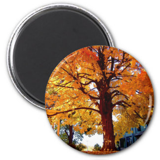 Fall Colors ... Magnet