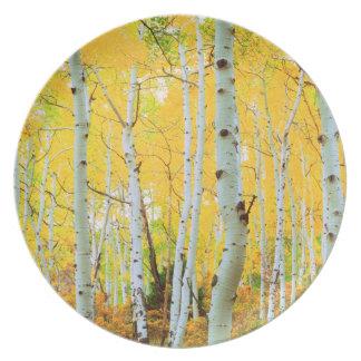 Fall colors of Aspen trees 1 Dinner Plate