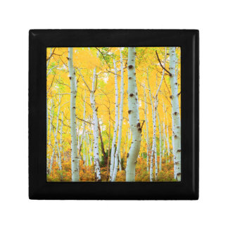 Fall colors of Aspen trees 1 Gift Box
