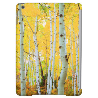 Fall colors of Aspen trees 1 iPad Air Case