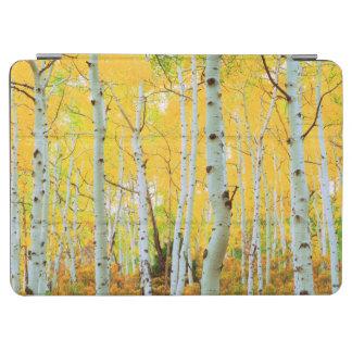 Fall colors of Aspen trees 1 iPad Air Cover