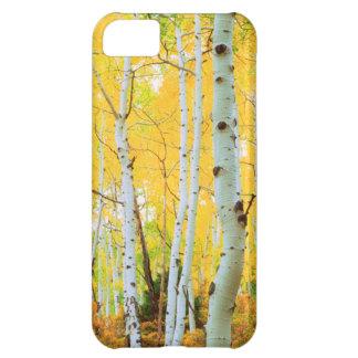 Fall colors of Aspen trees 1 iPhone 5C Case