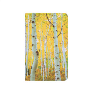 Fall colors of Aspen trees 1 Journal