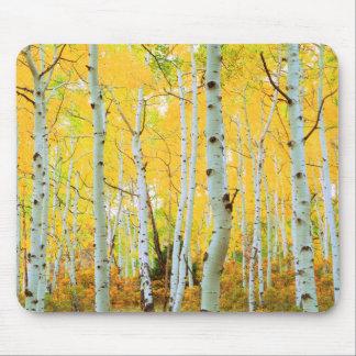 Fall colors of Aspen trees 1 Mouse Mat