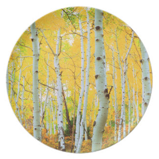 Fall colors of Aspen trees 1 Plate