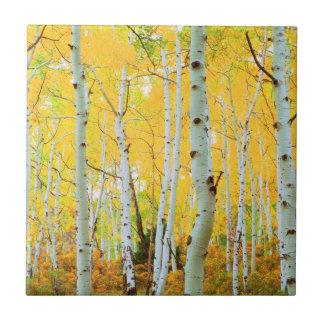 Fall colors of Aspen trees 1 Tile