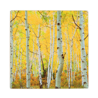 Fall colors of Aspen trees 1 Wood Coaster