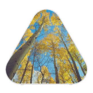 Fall colors of Aspen trees 2