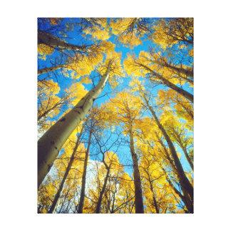 Fall colors of Aspen trees 2 Canvas Print