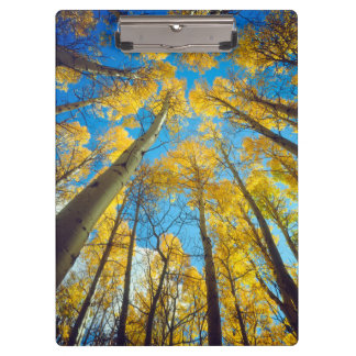 Fall colors of Aspen trees 2 Clipboard
